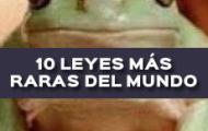 LAS 10 LEYES MÁS RARAS DEL MUNDO